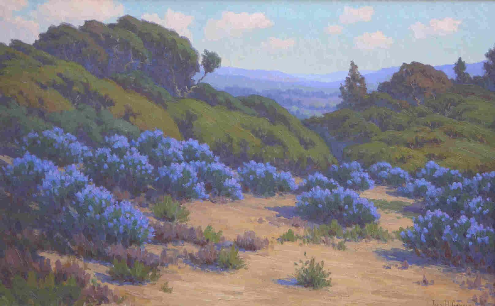 alt Bush Lupine, Near Del Monte