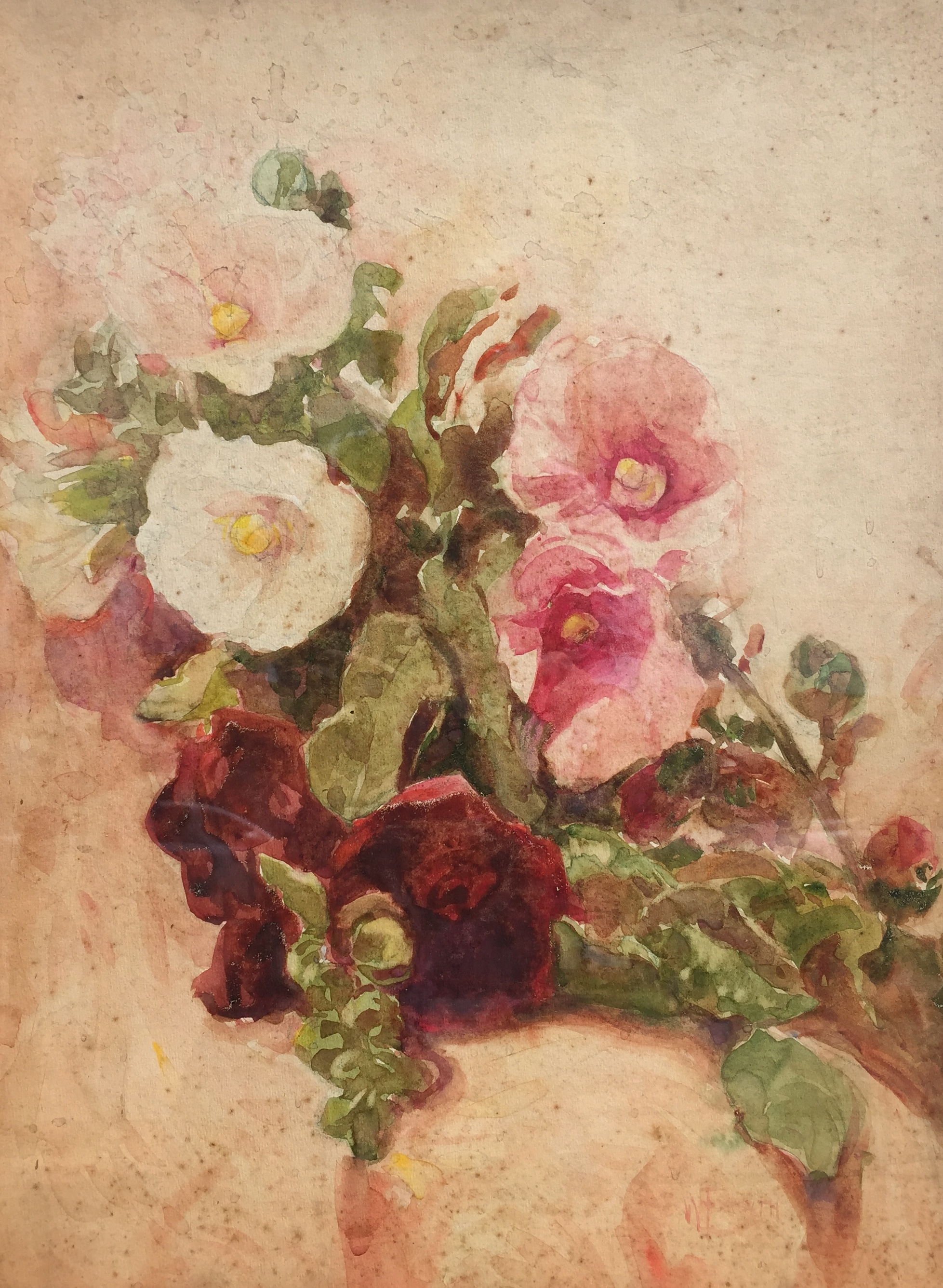 forsyth-whitepinkandredhollyhocks-cropped