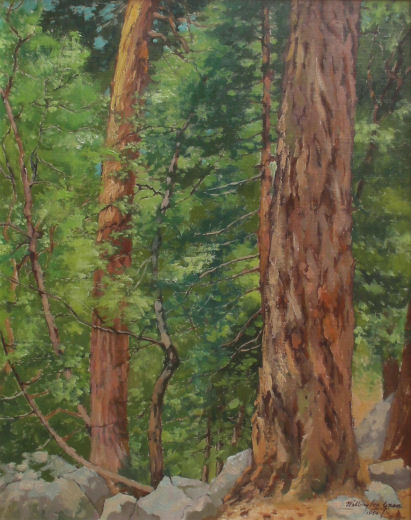 "alt ""California Redwoods"" 1950"