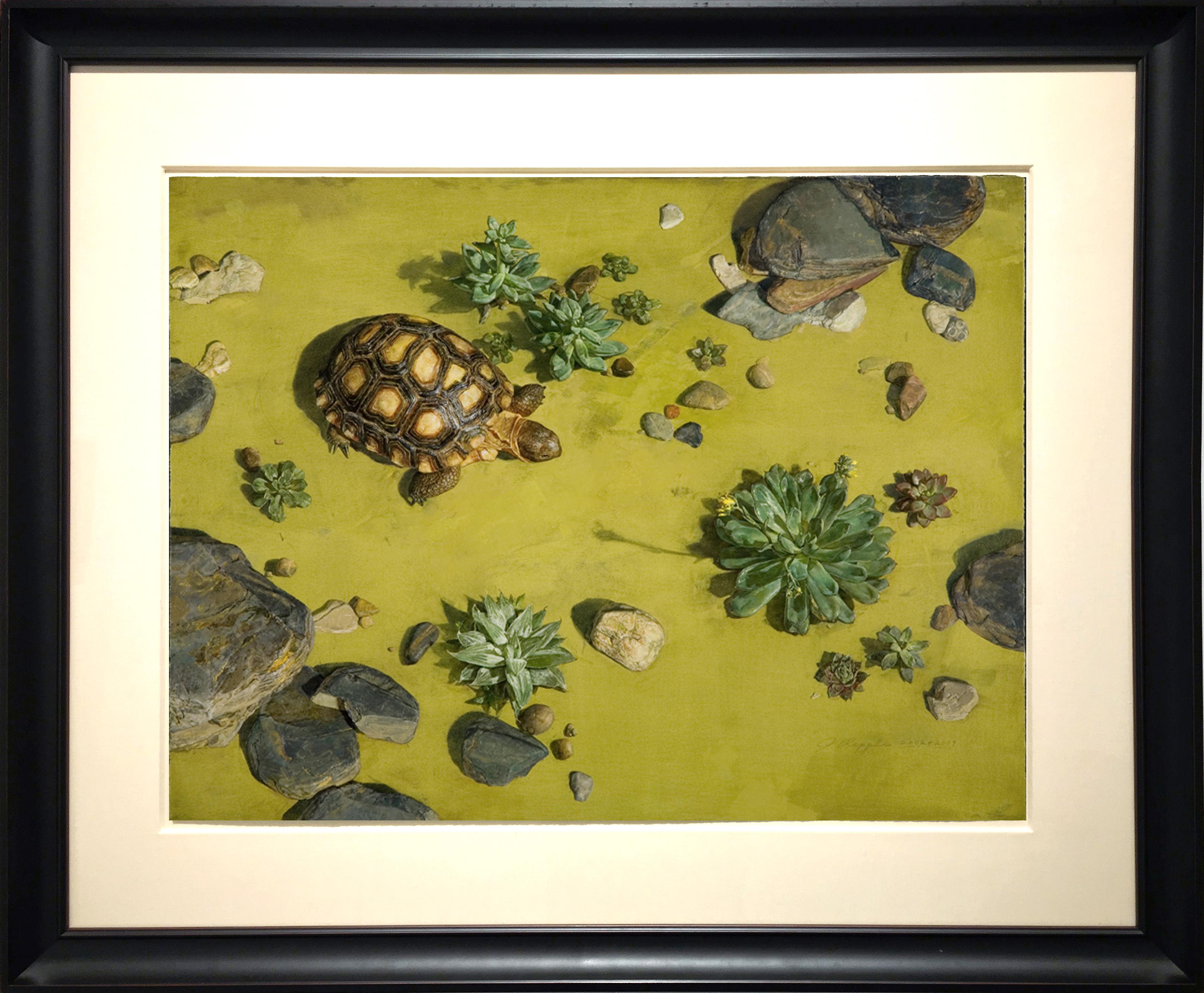 alt Tortoise