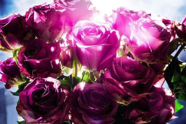 alt Spotting Rose