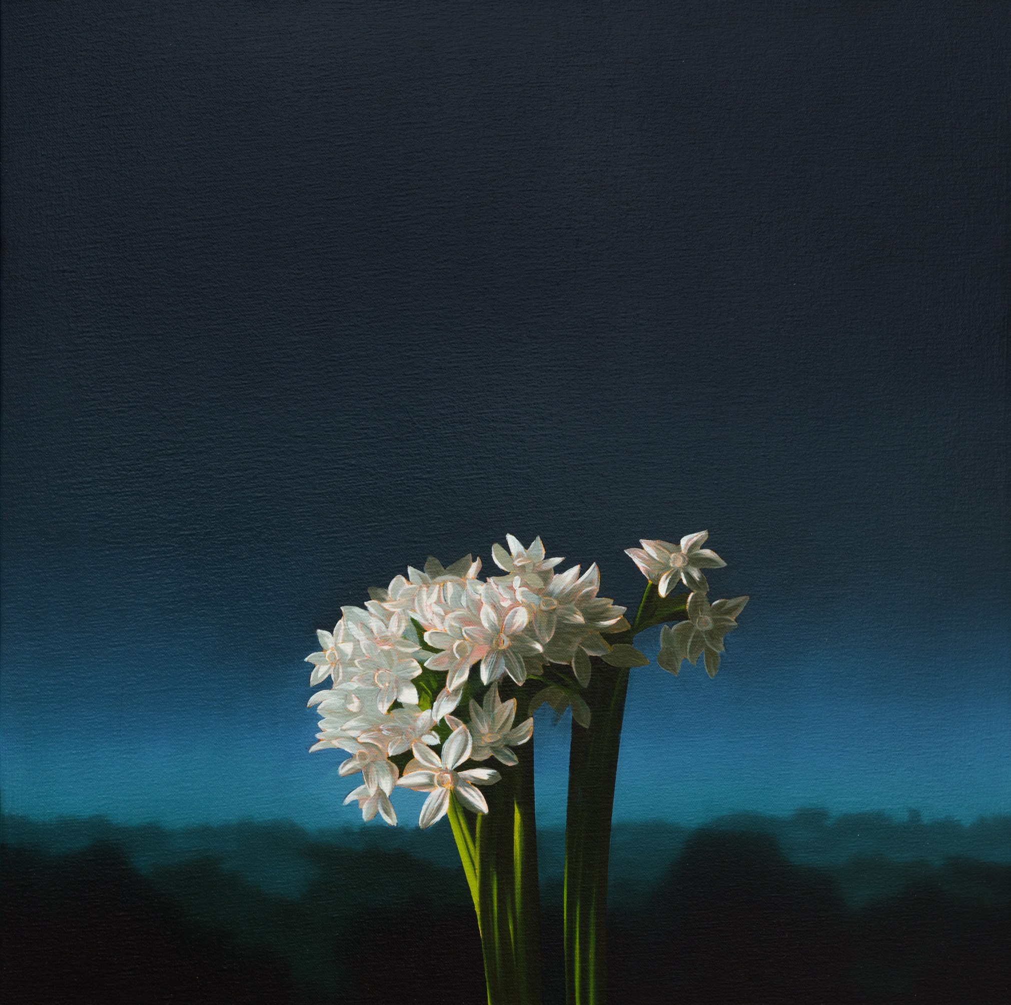 alt Narcissus Against Evening Sky
