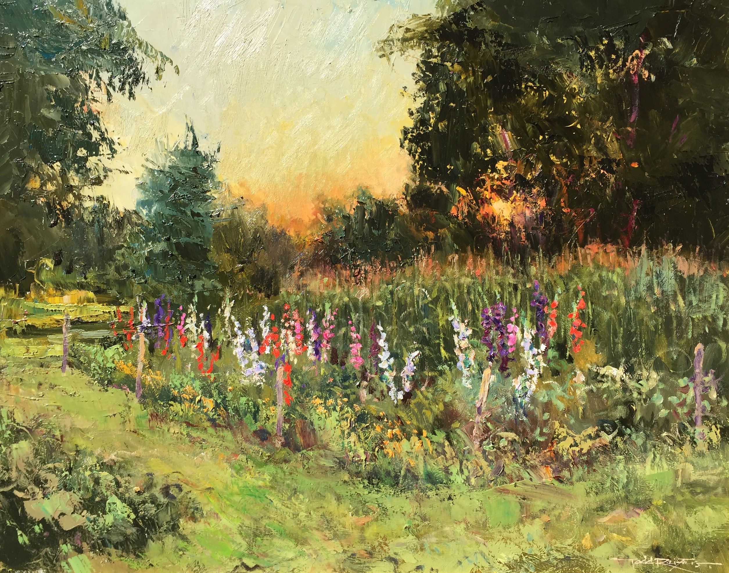 alt Gladiola Garden, Evening Light
