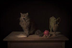 Bahat_Tami_The Feline
