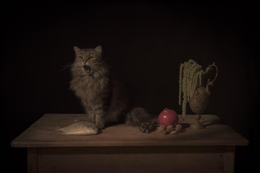 alt The Feline