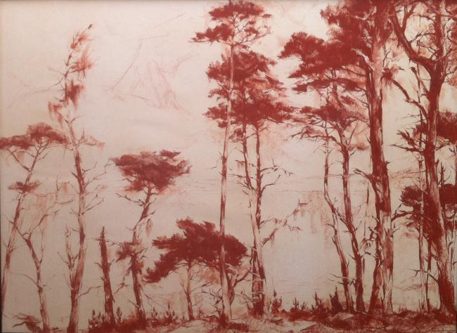 """Pines of Point Lobos"""