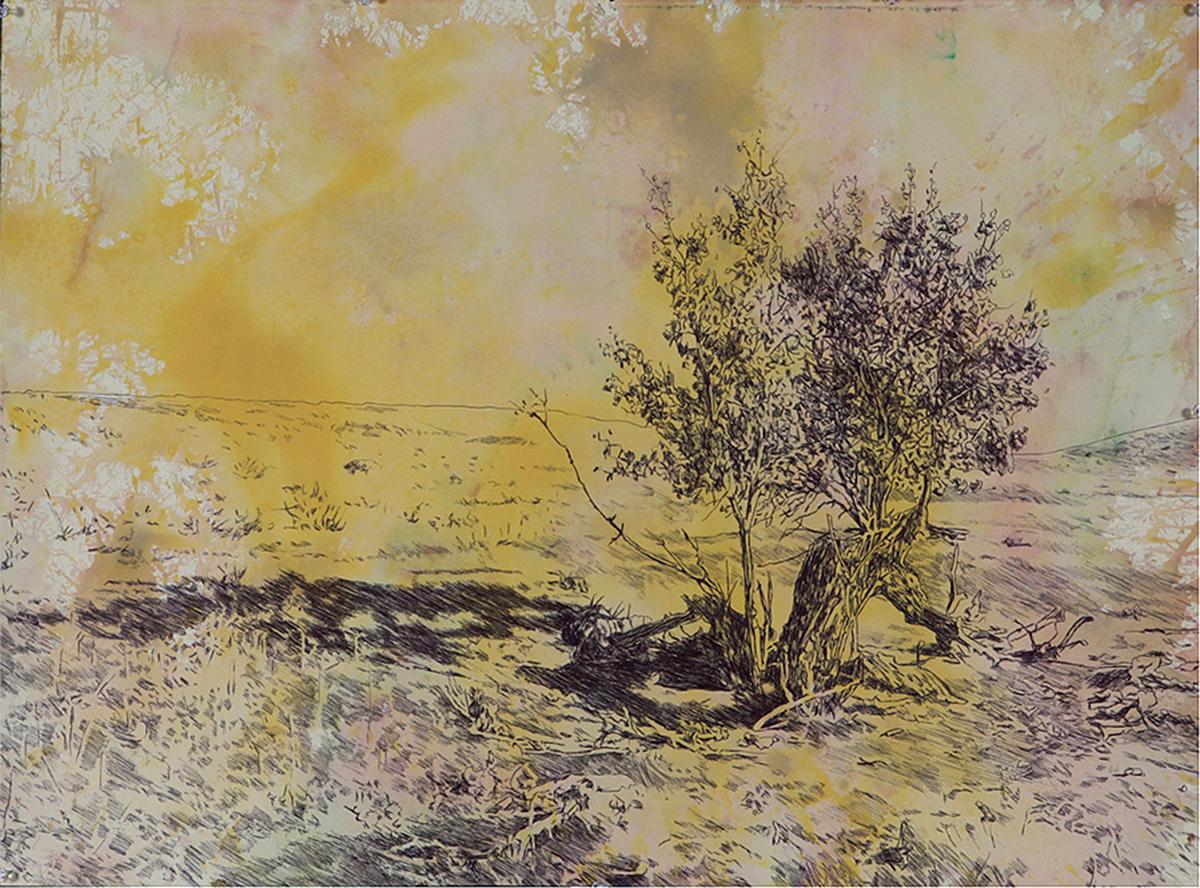 alt 1000 Acres Broken Tree