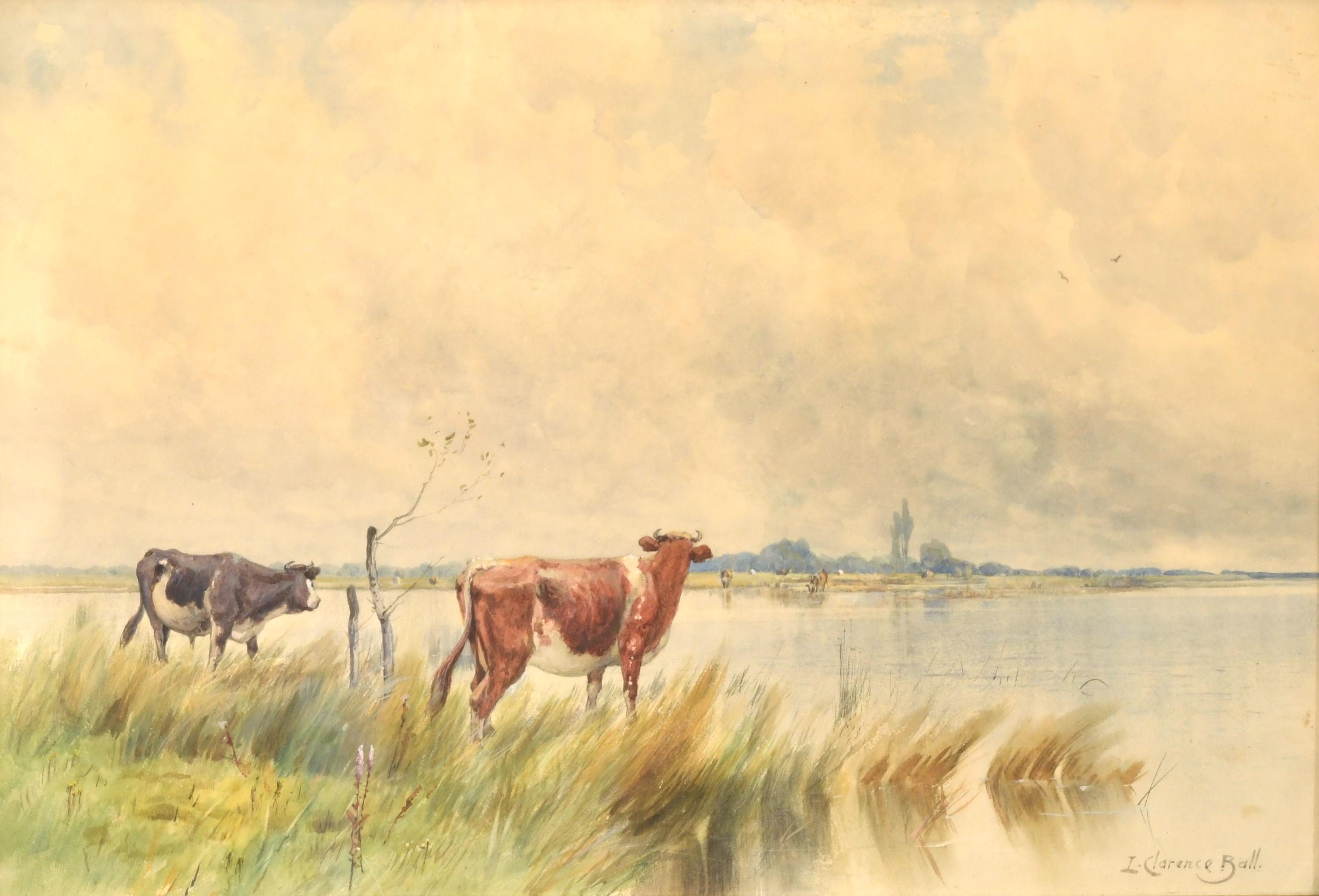 Watering Cows