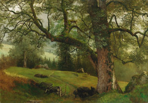 Bierstadt-A Trail through the Trees