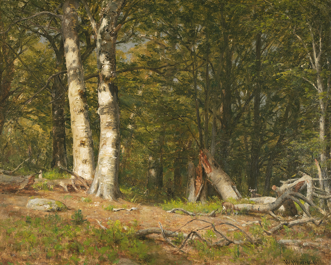 alt Fallen Birch