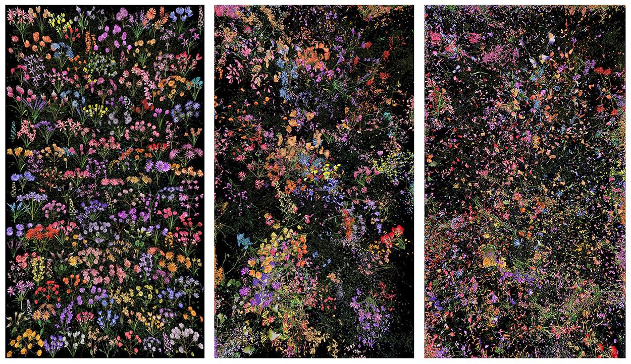 alt Botanic, 4 (From left to right: Still Frame 2, Still Frame 10, Still Frame 29)