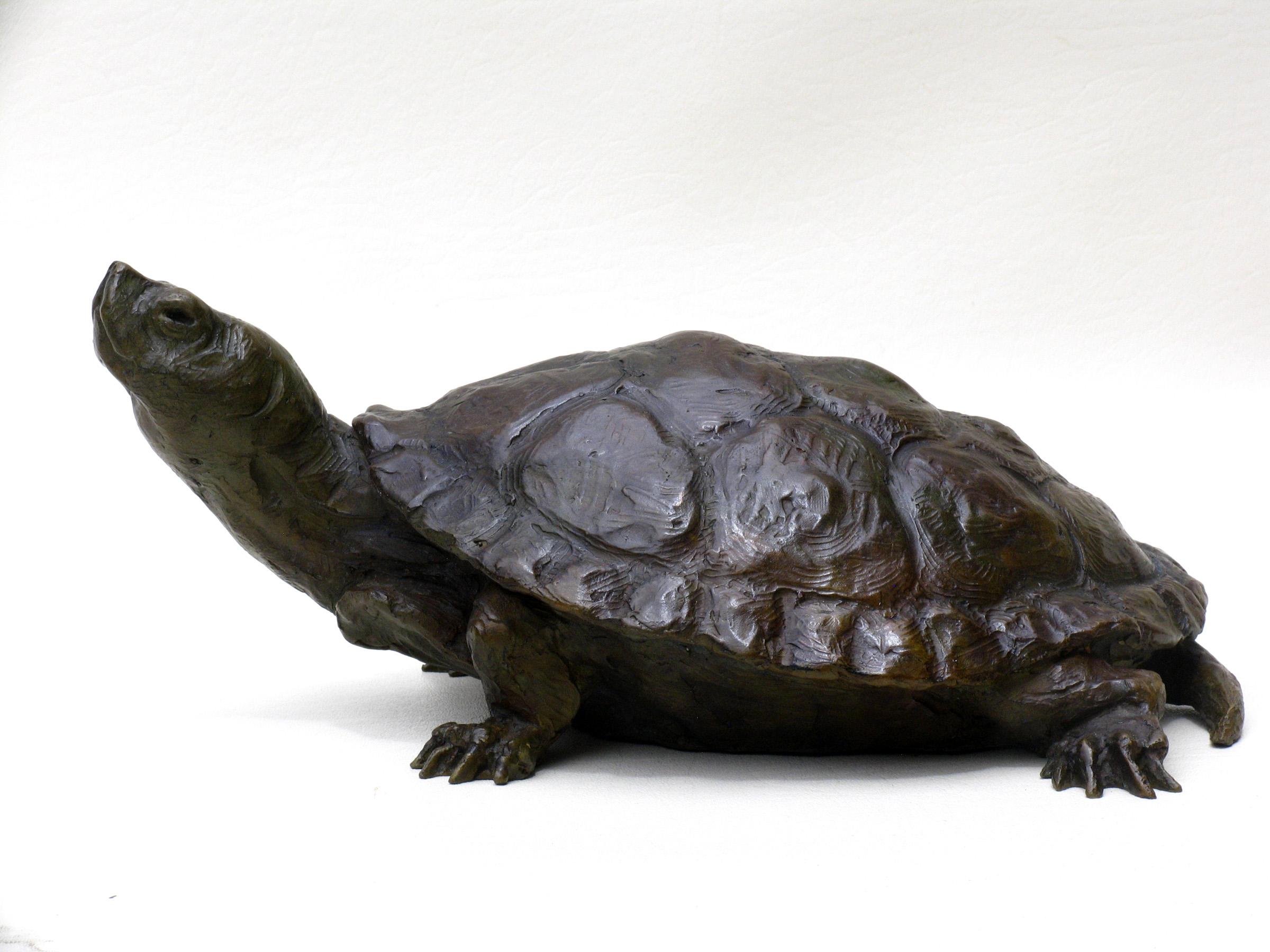 alt Remi's Turtle